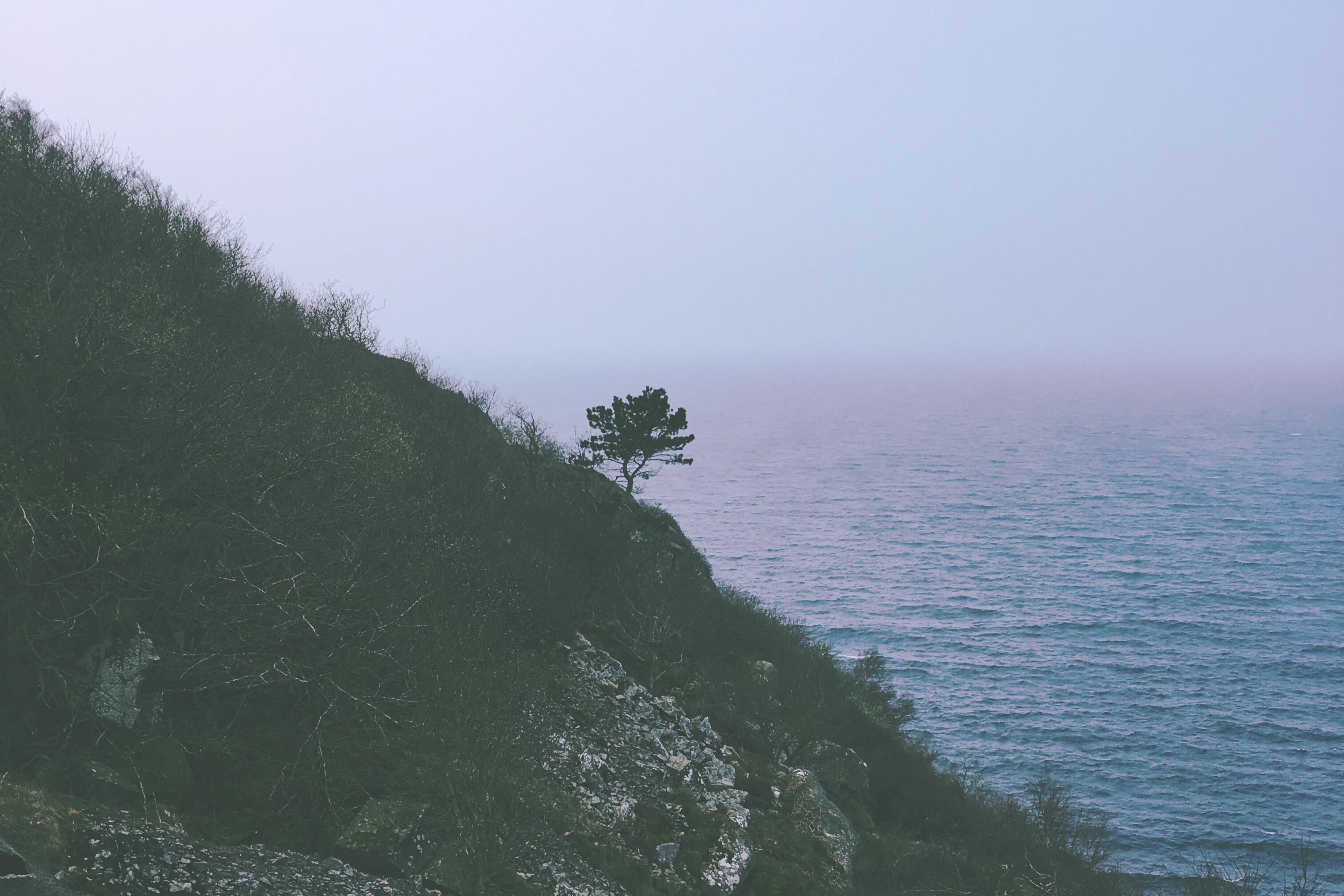 De enlige træer